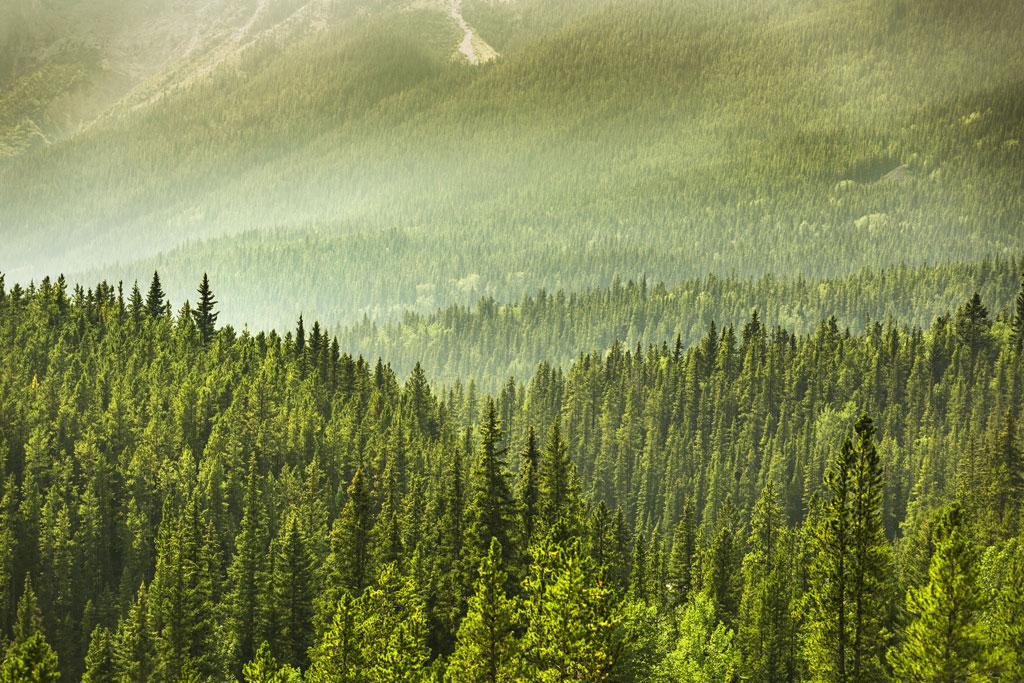Una buona notizia per il pianeta: gli alberi nel mondo sono 7 volte più di quelli stimati 2