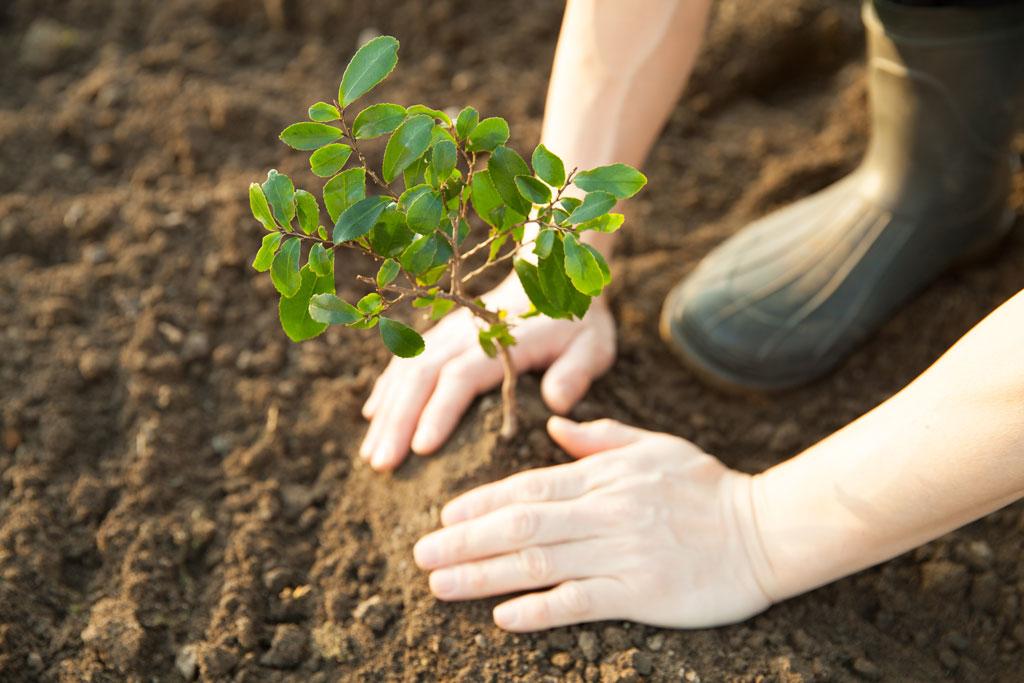 Una buona notizia per il pianeta: gli alberi nel mondo sono 7 volte più di quelli stimati 1