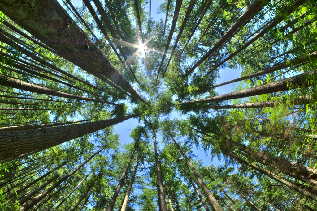 Una buona notizia per il pianeta: gli alberi nel mondo sono 7 volte più di quelli stimati