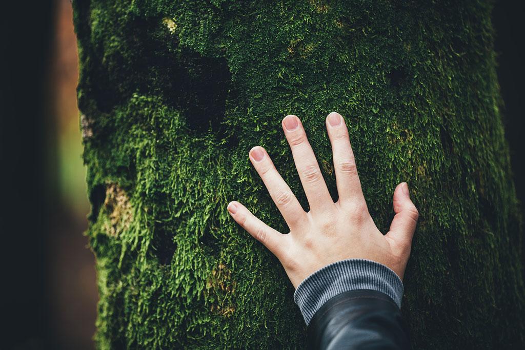rispettare la natura per una ripartenza sostenibile