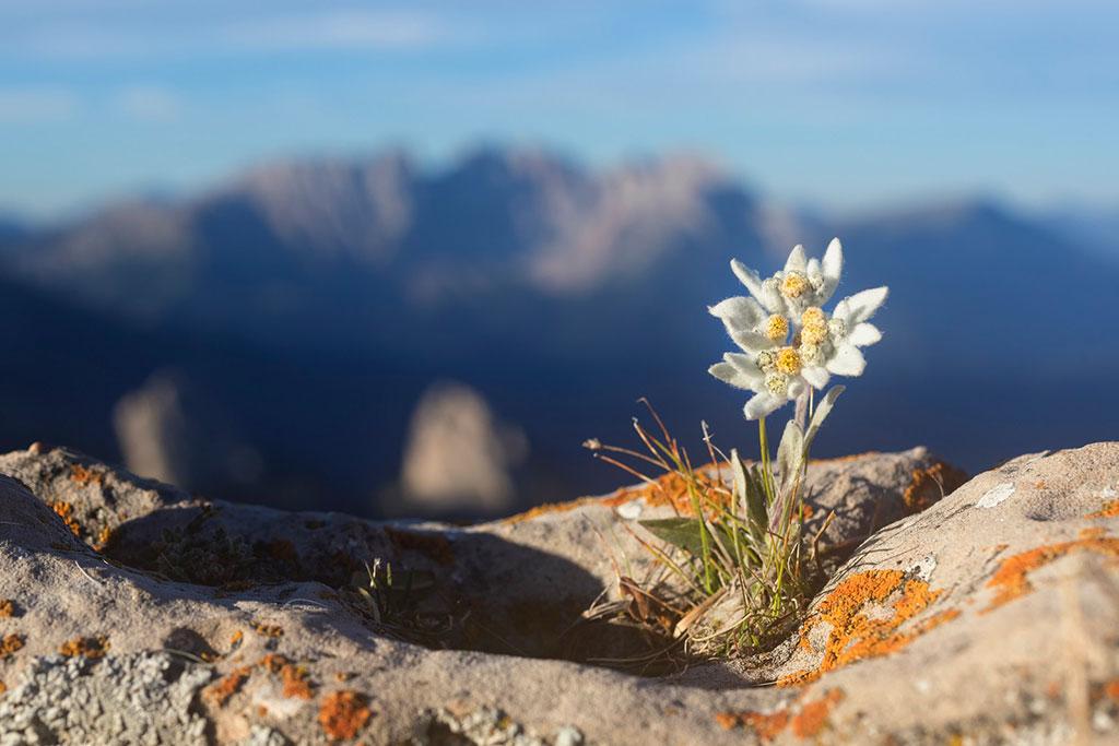 Biodiversità, il 30% del Pianeta deve diventare area protetta