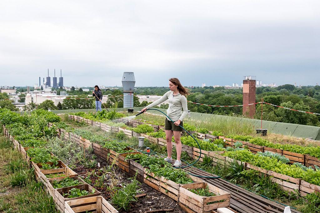 orti urbani nella città sostenibile