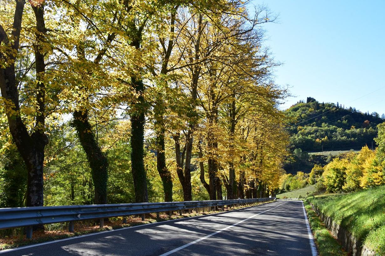 1 Electrified Vehicle = 1 Tree: il nuovo progetto internazionale sulla biodiversità lanciato da Arval 2